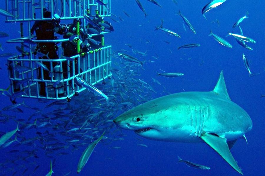 дайвинг с акулами в африке