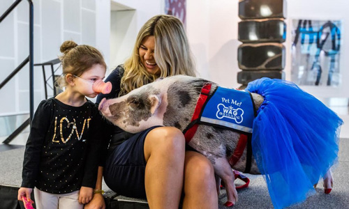свинья в аэропорту фото