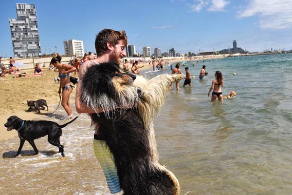 пляж для собак в марбелье