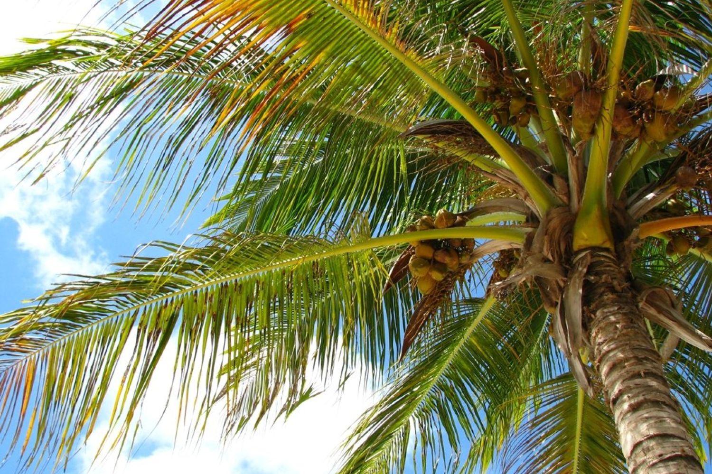 недорогой отдых в доминикане горящие туры