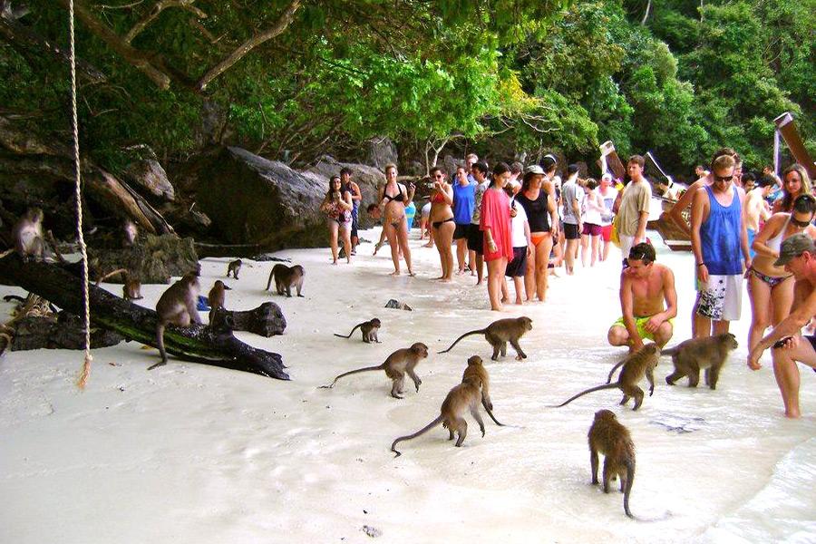 пляж Пхи-Пхи-Дон таиланд обезьяны