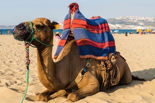 горящие путевки на отдых в египте
