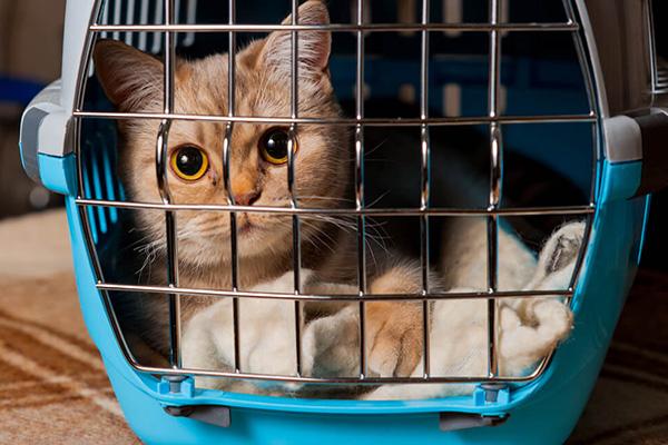 пассажир с кошками задержал авиарейс