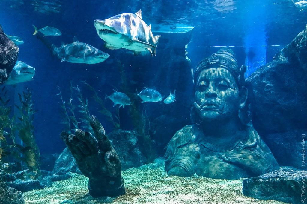 okeanarium-v-bangkoke-siam-sea-life-ocean-world