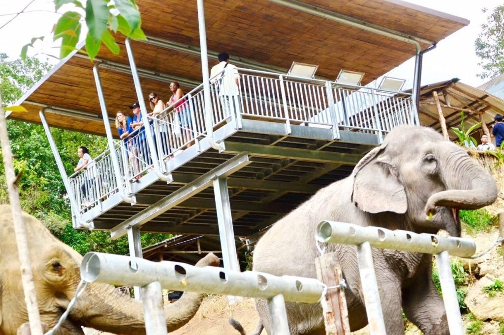 Бедная деревня в Непале станет новым курортом для гуманного отдыха со слонами