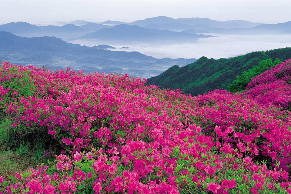 Достопримечательности Болгарии – Долина Роз