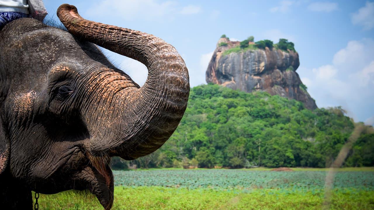 Все туры на Шри-Ланку