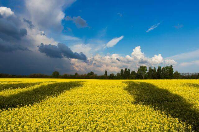 Страхование для путешествий по Украине
