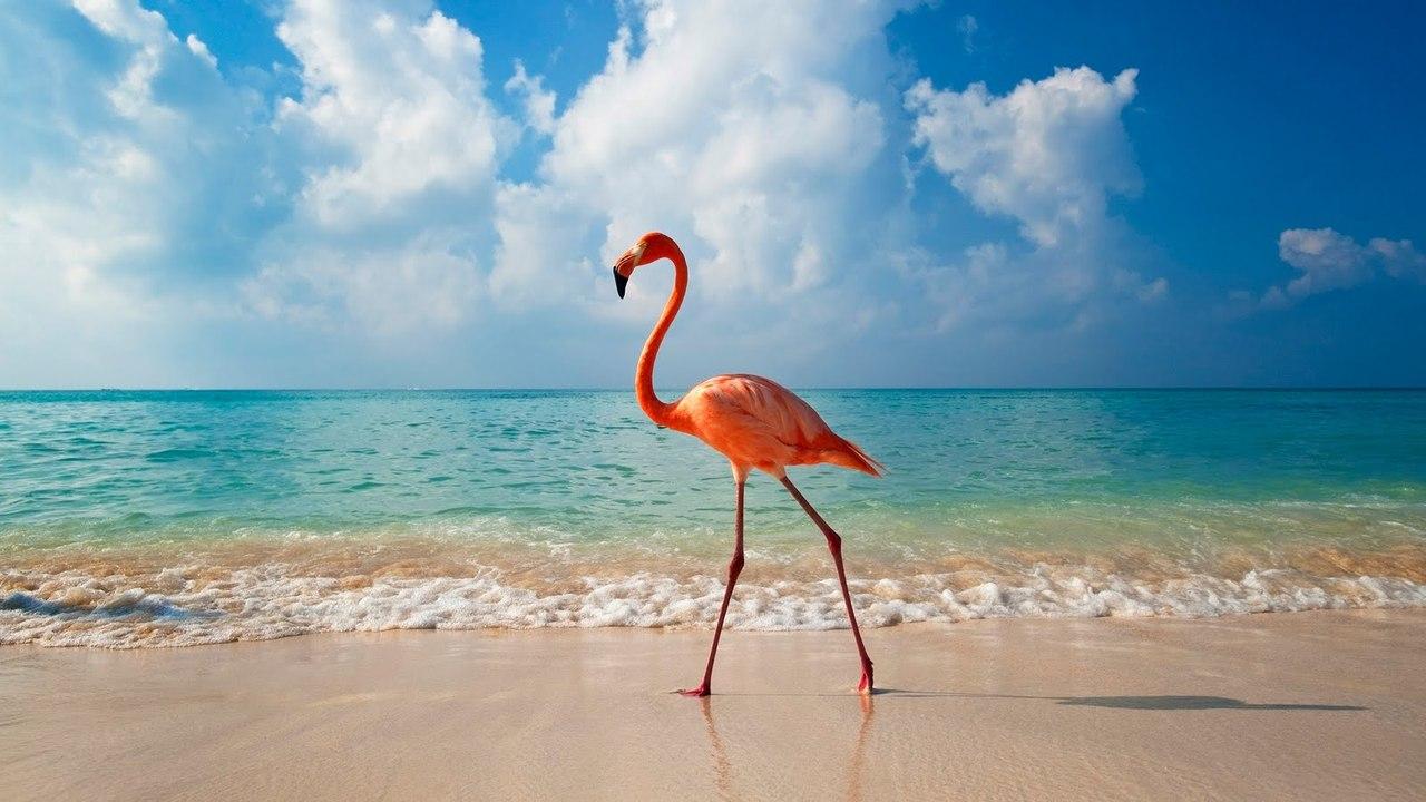 Туры в Доминикану на июль
