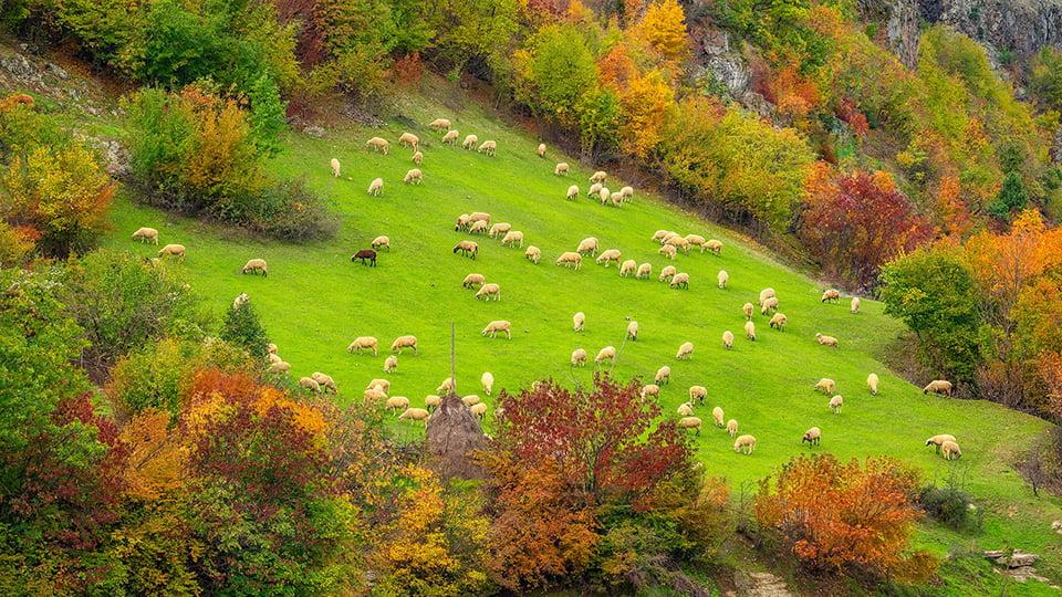 Туры в Болгарию осенью