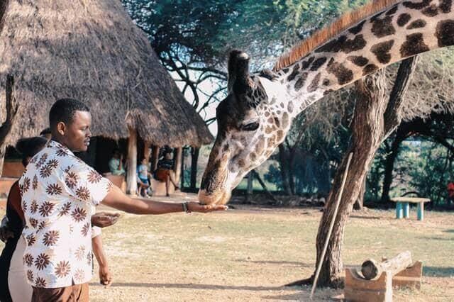 Чартерные рейсы в Кению