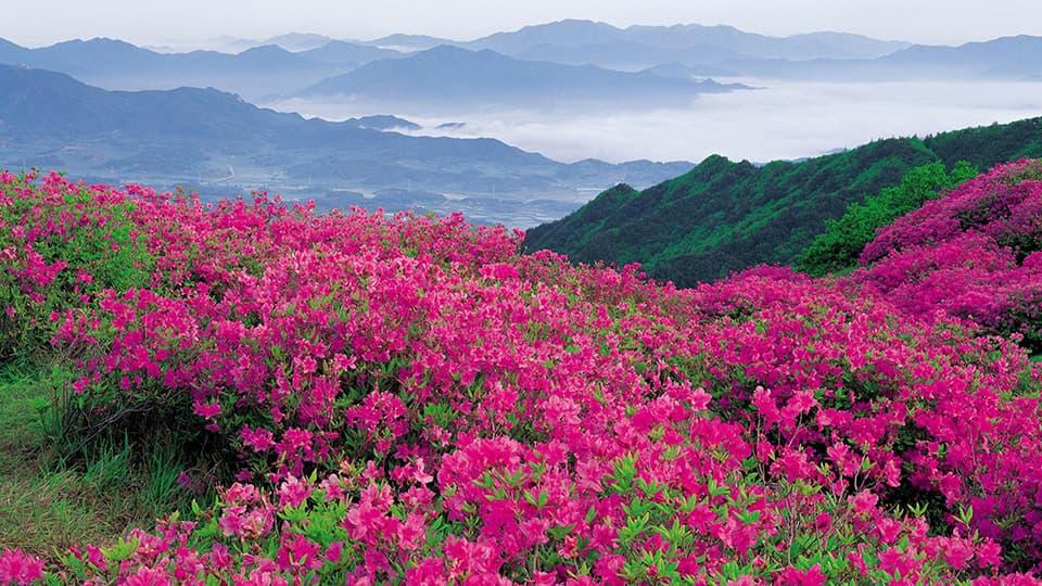 Фотографии Болгарии - Долина роз