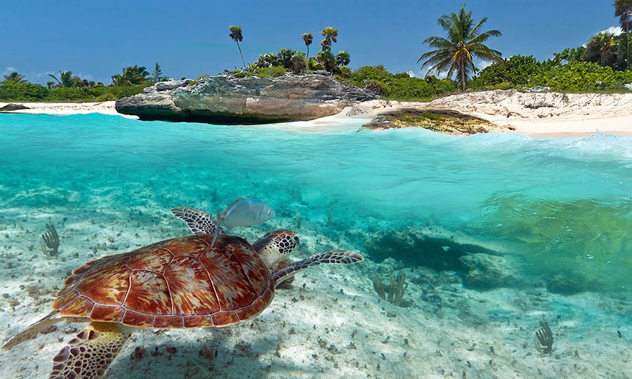 Когда лучше ехать в Доминикану?