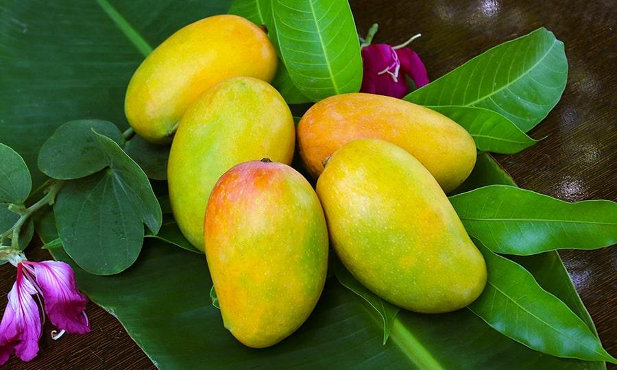 сезон манго в Египте - манго осенью