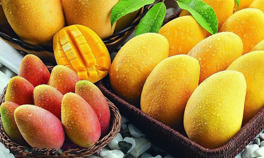 Когда сезон манго в Египте?